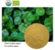 ORGANIC GOTU KOLA EXTRACT 20:1 - 100 caps - 700mg